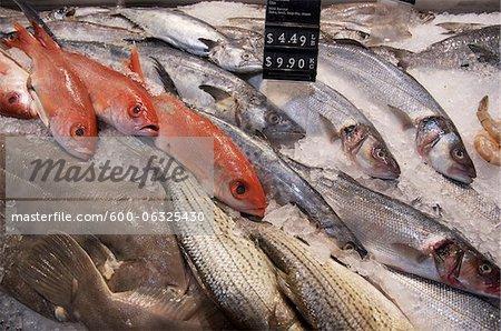 Variety of Fresh Fish on Ice, St Lawrence Market, Toronto, Ontario, Canada