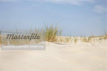 Sand Dunes and Dune Grass, Cap Ferret, Gironde, Aquitaine, France