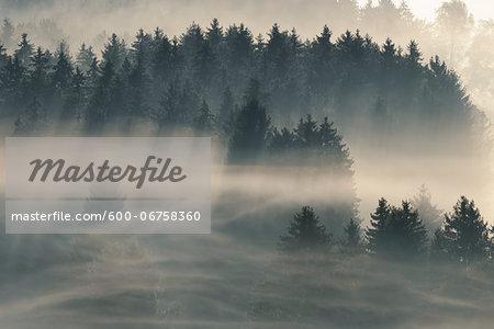 Morning Mist, Kochelmoor, Bad Tolz-Wolfratshausen, Upper Bavaria, Bavaria, Germany