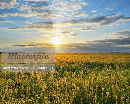 Sunset over Meadow, Altmuhlsee, Gunzenhausen, Franconia, Bavaria, Germany