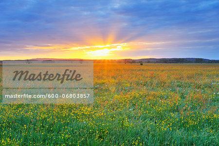 Sunrise over Meadow, Altmuehlsee, Gunzenhausen, Franconia, Bavaria, Germany