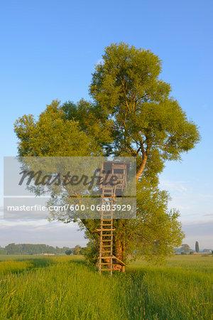 Hunting Blind in Tree, Hesse, Germany, Europe