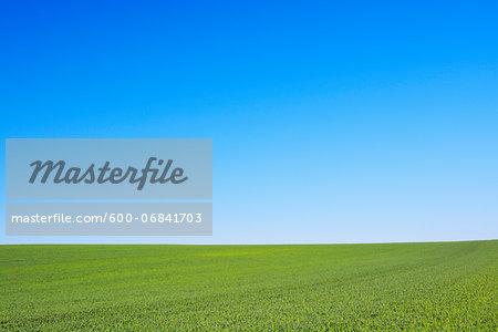 Grain field and Blue Sky, Hesse, Germany, Europe