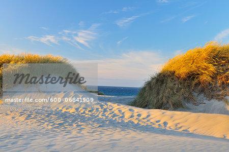Dunes at the Beach, Wharariki Beach, Golden Bay, Puponga, South Island, Tasman, New Zealand