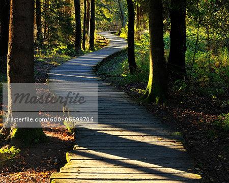 Boardwalk through Bog, Schwarzes Moor, Fladungen, Rhon Mountains, Bavaria, Germany