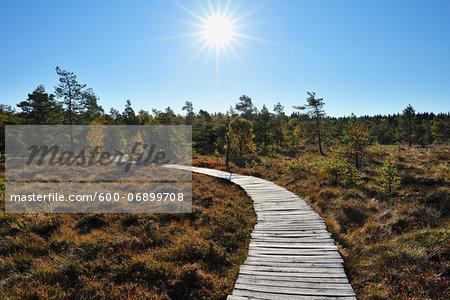 Boardwalk through Bog with Sun in Sky in Autumn, Schwarzes Moor, Fladungen, Rhon Mountains, Bavaria, Germany