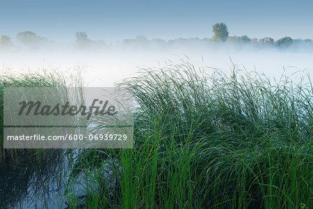 Lake in early morning fog, Summer, Hesse, Germany, Europe