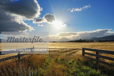 Cattle Gate with Sun in the Summer, Seddon, Marlborough, South Island, New Zealand