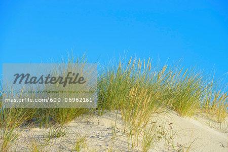 Sand Dunes and Marram Grass, Darsser Ort, Fischland-Darss-Zingst, Mecklenburg-Western Pomerania, Germany