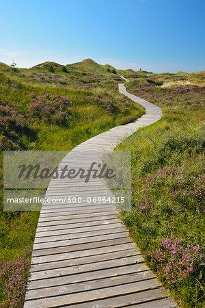 Wooden Walkway through Dunes, Summer, Norddorf, Amrum, Schleswig-Holstein, Germany