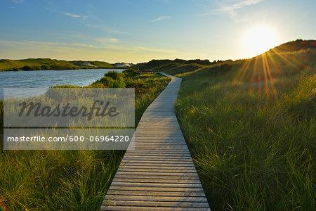 Boardwalk through Dunes, Summer, Wittduen, Amrum, Schleswig-Holstein, Germany
