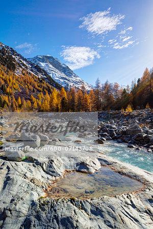 Larch Trees in Autumn Foliage by Rocky Creek Ova da Morteratsch with Piz Bernina in the background, Val Morteratsch, Canton of Graubunden, Switzerland