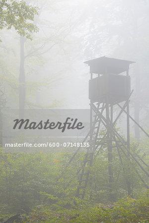 Hunting Blind in Beech Forest, Spessart, Bavaria, Germany