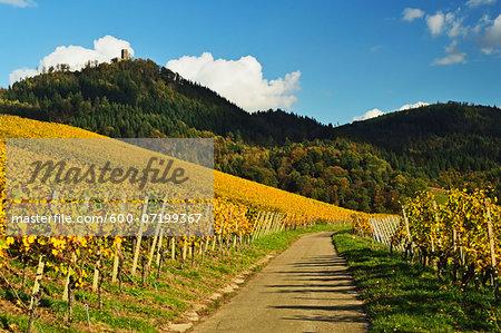 Vineyard Landscape and Yburg Castle on Hilltop, Ortenau, Baden Wine Route, Baden-Wurttemberg, Germany