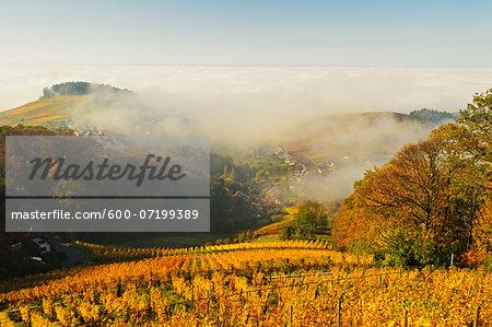 Vineyard Landscape and Waldmatt Village, Ortenau, Baden Wine Route, Baden-Wurttemberg, Germany