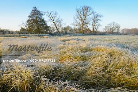 Marshland with Frosty Rime, Hesse, Germany