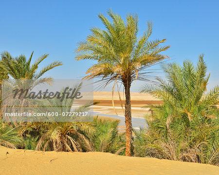 Date Palms and Salt Lake in Desert, Matruh Governorate, Libyan Desert, Sahara Desert, Egypt, Africa