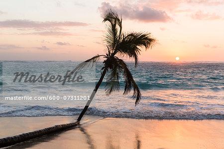 Lone coconut palm tree in surf on the beach, sunsrise, Playa Bavaro, Punta Cana, La Altagracia Province, Dominican Republic, Caribbean