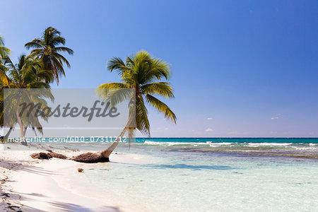 Coconut palm trees and white beach by turquoise clear water, Del Este National Park (Parque Nacional del Este), Dominican Republic, Caribbean
