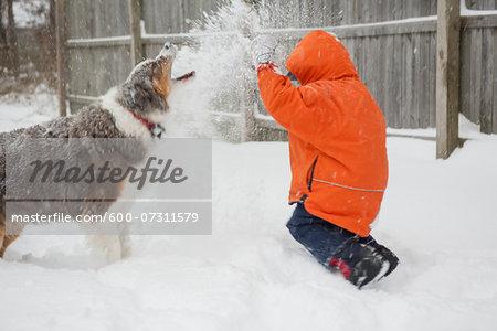Boy having Snowball Fight with his Australian Shepherd Dog, Maryland, USA