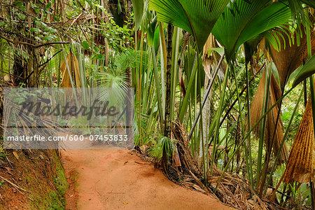 Pathway through Rainforest, Vallee de Mai Nature Preserve, Praslin, Seychelles