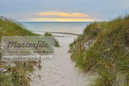 Coastal Path to Beach at Dusk, Darss West Beach, Prerow, Darss, Fischland-Darss-Zingst, Western Pomerania, Germany
