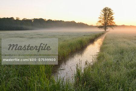 Tree in field in early morning light, Nature Reserve Moenchbruch, Moerfelden-Walldorf, Hesse, Germany, Europe