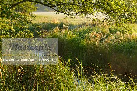 Landscape in morning light, Nature Reserve Moenchbruch, Moerfelden-Walldorf, Hesse, Germany, Europe