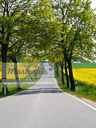 Tree-lined view of Highway through Weser Hills, North Rhine-Westphalia, Germany