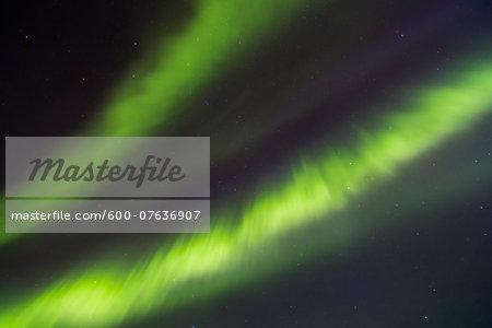 Northern Lights (Aurora Borealis) illumintaing Night Sky, Pyha-Luosto National Park, Lapland, Finland
