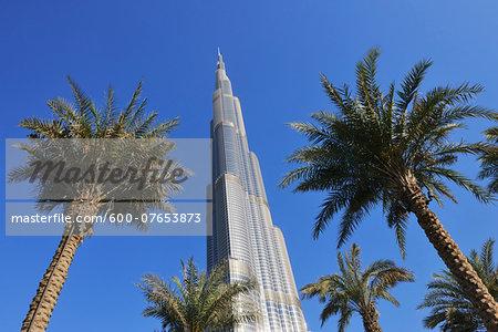 Looking up at Palm Trees and Burj Khalifa, Dubai, United Arab Emirates