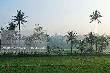 Rice Field and Borobodur in the distance, Kedu Plain, Java, Indonesia