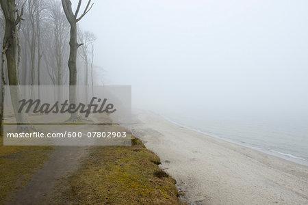 Coastal Beech Forest and Baltic Sea with Path and Fog, Gespensterwald, Nienhagen, Bad Doberan, Western Pomerania, Germany