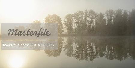 Common Alder (Alnus glutinosa) Trees beside Lake in Early Morning in Autumn, Bavaria, Germany