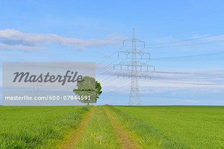 Power Line with Tree and Tire Tracks through Field, Schwabhausen, Upper Bavaria, Bavaria, Germany