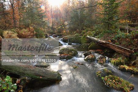Landscape of a river (Kleine Ohe) flowing through the forest in autumn, Landscape of a river (Kleine Ohe) flowing through the forest in autumn, Bavarian Forest National Park, Bavaria, Germany