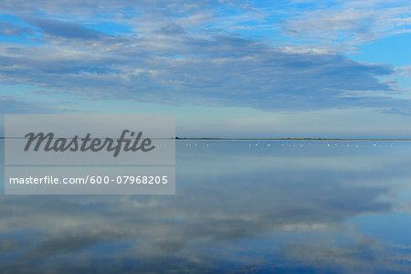 Lake in Morning, Enfores de la Vignolle, Saintes-Maries-de-la-Mer, Camargue, Bouches-du-Rhone, Provence-Alpes-Cote d'Azur, France