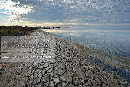 Cracked Dry Mud Shore at Lake in Summer, Enfores de la Vignolle, Digue a la Mer, Camargue, Bouches-du-Rhone, Provence-Alpes-Cote d'Azur, France