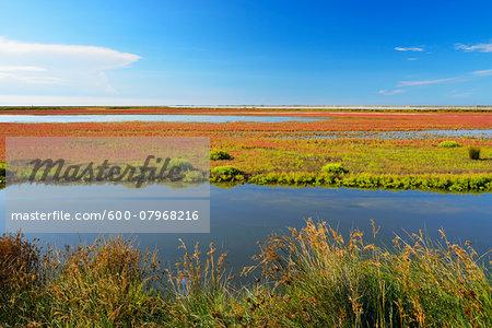 Marshland in Summer, Digue a la Mer, Camargue, Bouches-du-Rhone, Provence-Alpes-Cote d'Azur, France