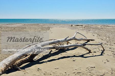 Driftwood on Sandy Beach, Mediterranean Sea, Saintes-Maries-de-la-Mer, Camargue, Bouches-du-Rhone, Provence-Alpes-Cote d'Azur, France
