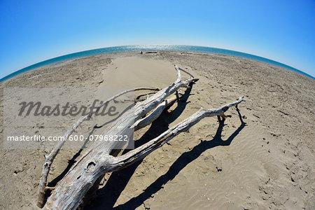 Wide Angle View of Driftwood on Sandy Beach with Curved Horizon, Mediterranean Sea, Saintes-Maries-de-la-Mer, Camargue, Bouches-du-Rhone, Provence-Alpes-Cote d'Azur, France