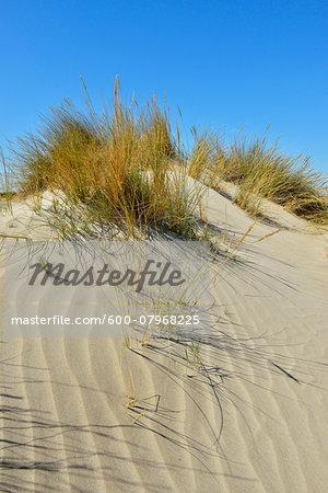 Sand Dune in Summer by Mediterranean Sea, Saintes-Maries-de-la-Mer, Camargue, Bouches-du-Rhone, Provence-Alpes-Cote d'Azur, France