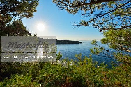 Sun and Coast through Pine Trees in Summer, La Couronne, Martigues, Cote Bleue, Mediterranean Sea, Bouches-du-Rhone, Provence-Alpes-Cote d'Azur, France