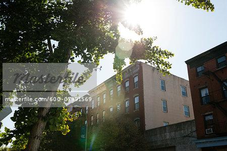 Sunflare through Trees, Williamsburg, Brooklyn, New York City, New York, USA