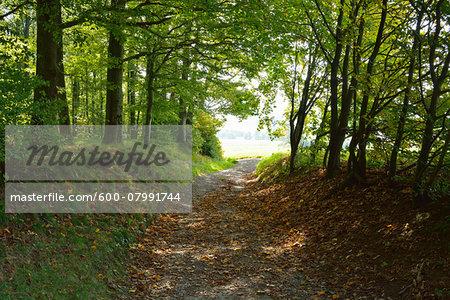 Forest Path, Katzenbuckel, Waldbrunn, Baden Wurttemberg, Germany