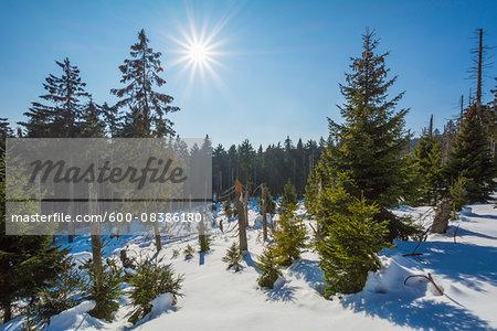 Mountain Forest with Sun in Winter, Altenau, Harz, Lower Saxony, Germany
