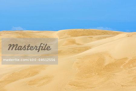 Sand Dunes, Rubjerg Knude, Lokken, North Jutland, Denmark