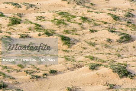 Aerial view of Sand Dunes, Rubjerg Knude, Lokken, North Jutland, Denmark