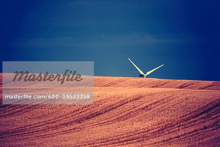 Wind turbine blades sticking up above cut grain field, Canada