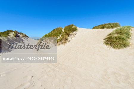Sand Dunes, Klittmoller, North Jutland, Denmark